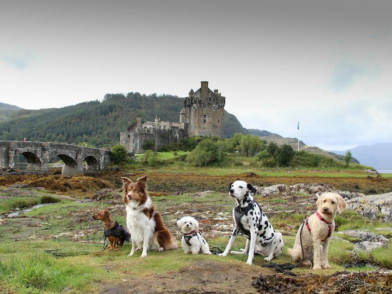 Hunde vor Eilean Donan Castle