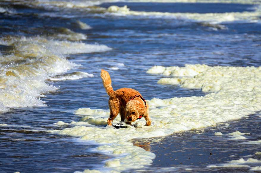 Texel-mit-Hund-Paws-on-Board