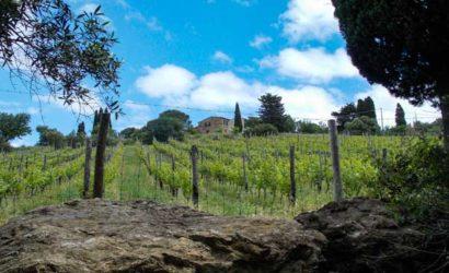 Weinberg in der Toskana