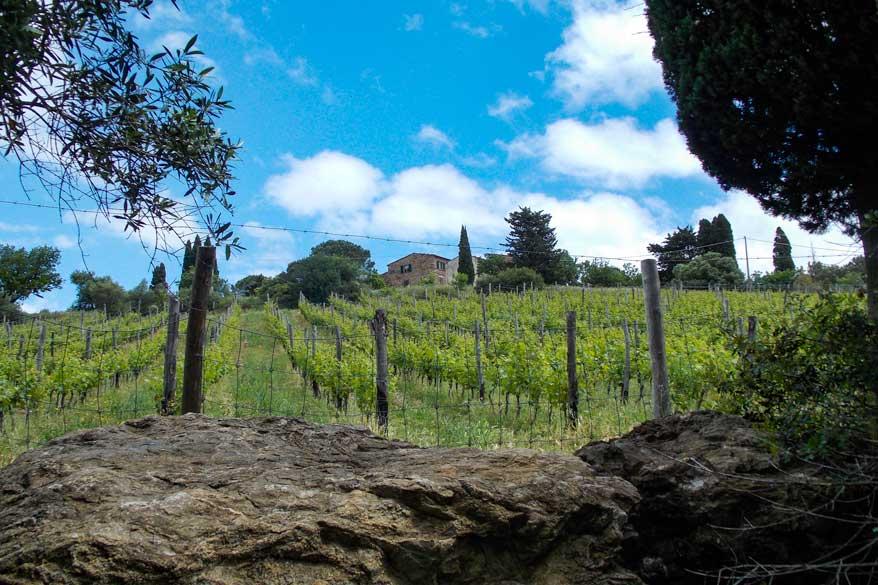 Weinbergt in der Toskana
