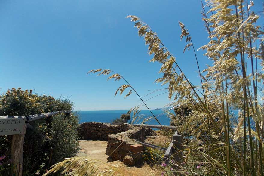 Ausblick hohes Gras Toskana