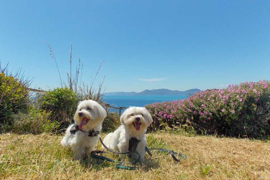 Diego und Balu in der Toskana
