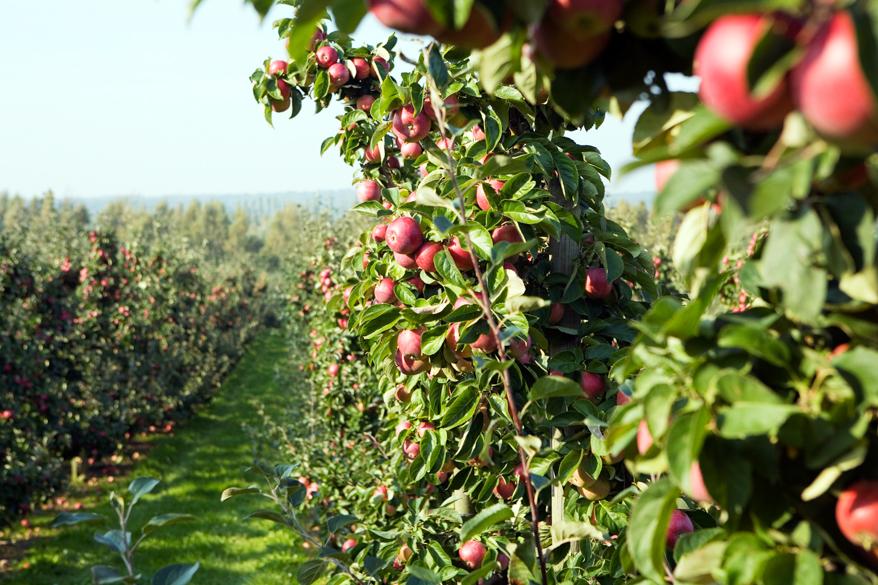 miriam_preis-fruit_and_vegetable_farm-765-10